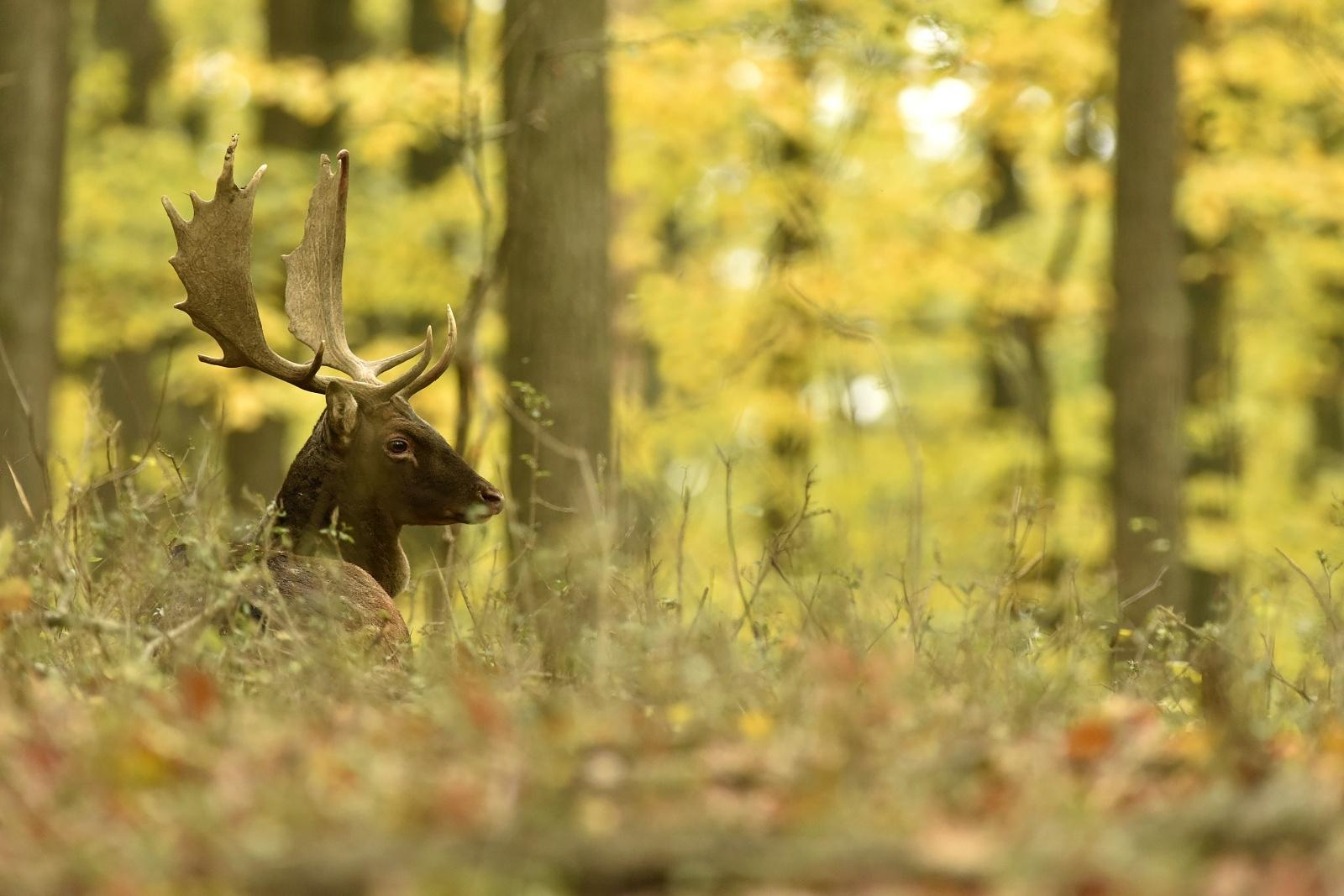 42c30b6f3 Jeseň je pre mnohých wildlife fotografov plná vysnivaných fotografii,  predstáv a túžob zachytiť jedinečný a neopakovateľný moment. Ponúka nám  hneď niekoľko ...